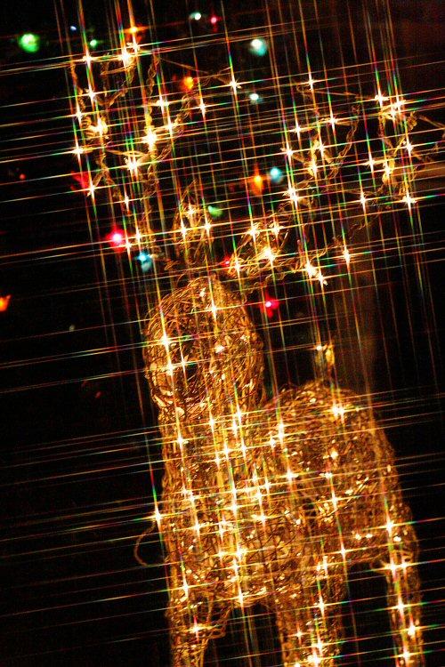 Christmaslights 023 copyrsz